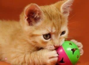 chaton-joue-calme