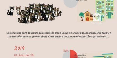 surpopulation-feline