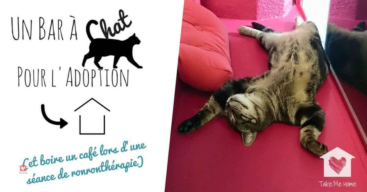 un bar chat grenoble pas comme les autres blog take me home. Black Bedroom Furniture Sets. Home Design Ideas