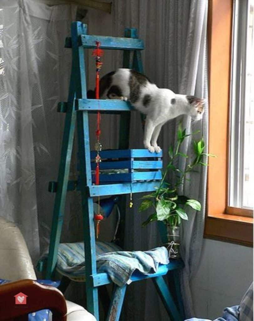 Comment Fabriquer Un Arbre À Chat fabriquer un arbre à chat : 6 idées faciles et pas chères