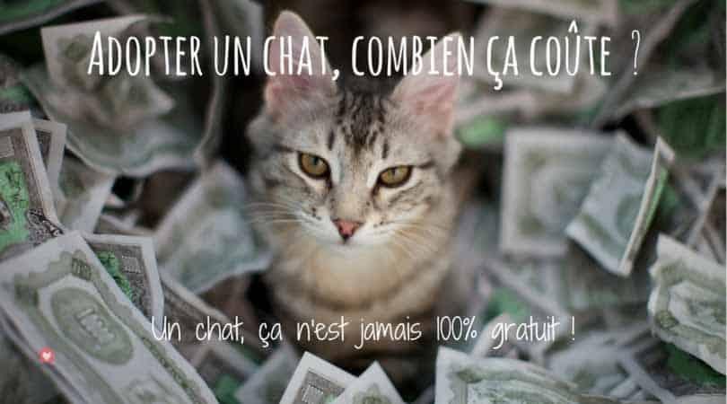 Combien coûte un chat ? Le budget à prévoir ! | Blog