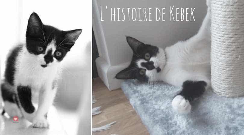 Adopter un chaton non sevré, quelles conséquences ? » Blog