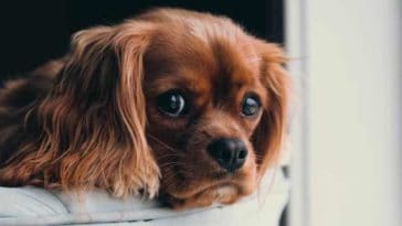 adopter un chien questions et reflexion